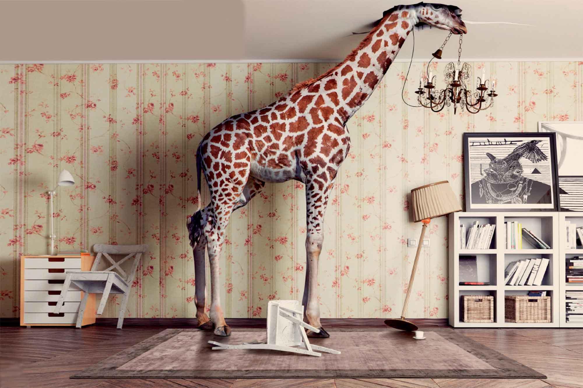 Χαλί Monnalisa Cipria Carpet Couture 160X230